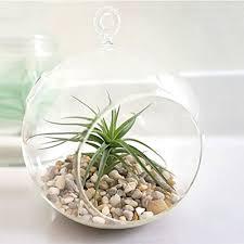 charming clear glass hanging planter terrarium globe tea light