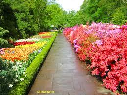 immagini di giardini fioriti keukenhof uno dei giardini primaverili pi禮 estesi al mondo
