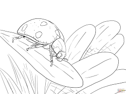 ladybug on leaf coloring page free printable coloring pages