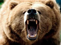 Bears Montana Hunting And Fishing - montana bowhunter injured by grizzly shilohtv