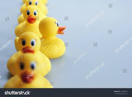 row yellow rubber ducks one ducks stock photo 410986507 shutterstock