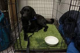 crate training crate training u2013 providing a refuge to your dog doggy bakery