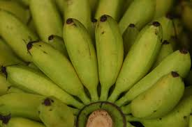 Tiny Banana Are Green Bananas Better For You Livestrong Com