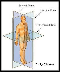 Planes And Anatomical Directions Worksheet Answers Mrsschlangensscience Anatomy And Physiology Class Resources