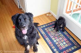 Best Flooring With Dogs The Best Hardwood Floors If You Have Dogs The Log Home Guide