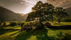 wallpaper ireland 5k 4k wallpaper trees hills meadows sunset