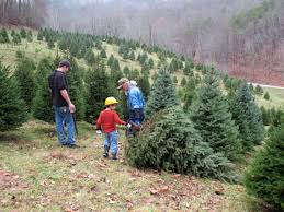 jarvis christmas tree farm gives families a chance to make