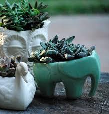 planter for succulents best of elephant succulent planter