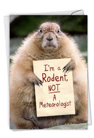 groundhog day cards i m a rodent petigreet groundhog day card by nobleworks