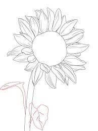 sunflower drawing images how to draw a sunflower draw central