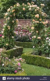 rose arch with climbing u0027crown princess margareta u0027 rosa and buxus
