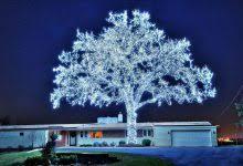 crazy christmas tree lights teal christmas tree lights christmas decor inspirations