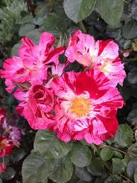 the bellingrath rose garden u2013 bellingrath gardens u0026 home