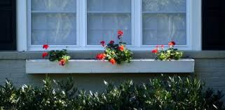 Plants For Winter Window Boxes - how to grow geraniums over the winter today u0027s homeowner