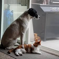 dixie cat and sadie dog love to guard the backyard together aww