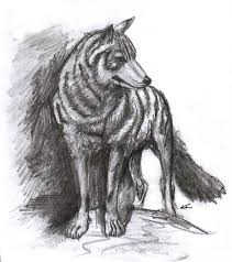 wolf sketch by halcyondf by wolfworks on deviantart
