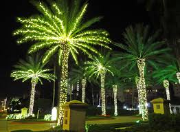 outdoor lighted palm tree gardens and landscapings decoration changing horizons literally tiny lessons blog xmas lights sand key fl home decorating bohemian
