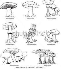 mushroom sketch immagini stock immagini e grafica vettoriale