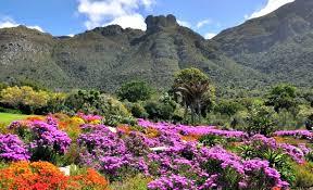 Kirstenbosch Botanical Gardens Kirstenbosch Gardens Cape Town Ticket Prices Hours Free