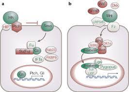Tissue Renewal Regeneration And Repair Figure 1 Tissue Repair And Stem Cell Renewal In Carcinogenesis