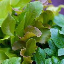 Vegetable Garden Blogs by Vegetable Garden Nogmoseedbank U0027s Blog