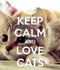 Original Keep Calm Meme - keep calm and love cat we love animals pinterest calming cat