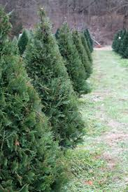 christmas best christmas tree farm images on pinterest trees