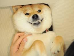 Shiba Meme - shiba inu doge meme by viexy on deviantart