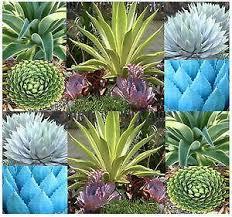 indoor plants ebay