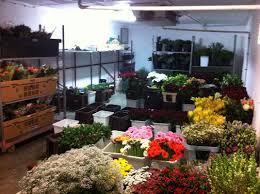 chambre froide fleuriste fleurs coupees site de fleurs amiens