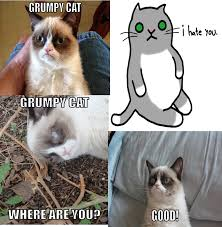 No Meme Grumpy Cat - grumpy cat grumpy cat know your meme