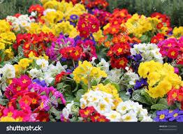 garden full flowers stock photo 72342064 shutterstock
