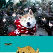 Doge Meme Christmas - doge meme christmas 28 images 25 best memes about doge christmas