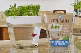 amazon com back to the roots water garden live indoor house