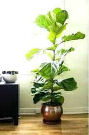 best light for plants low light plants indoor coryc me
