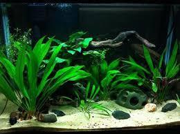 best 25 20 gallon aquarium ideas on pinterest 1 gallon fish