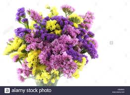 statice flowers pink purple yellow statice flowers bouquet on white background