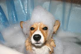 Make Bathtime Fun For Your Dog Tub Time For Dogs Hints And Tips For Bathing Your Dog