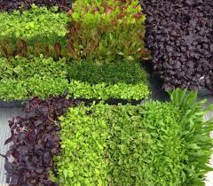 Aeroponic Vertical Garden Local Tower Garden Farmer Produces Aeroponic Food For Disney