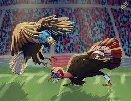 turkey vs bald eagle