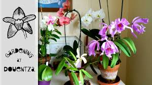revisit of tina u0027s orchid u0026 house plant collection youtube