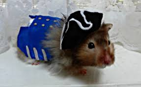 for the love of white halloween pet costumes
