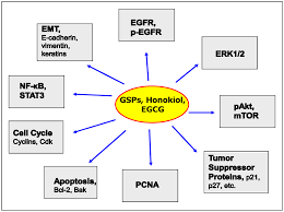 molecules free full text emerging phytochemicals for the