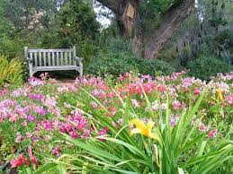 Ucr Botanical Gardens A Field Of Alstroemeria Brings Bright Color To The Grounds Of The