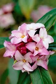best 25 flower plants ideas on pinterest flowering plants