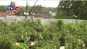 home terrace farming home design trick free