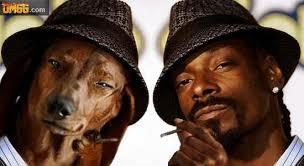 Snoop Meme - snoop dogg and dog snoop eurokeks meme stock exchange