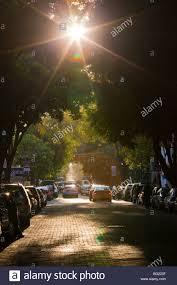 zona rosa tree lighting tree lined street in the zona rosa in mexico city stock photo