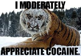 Coke Bear Meme - 82 year old idaho woman found with cocaine in her car my own