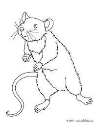 coloring page of a rat 71 best rats love coloring images on pinterest digi sts